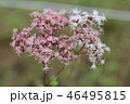 秋の草花 46495815