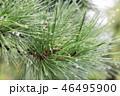 旧田中邸の庭 46495900