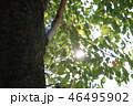 公園の木 46495902