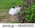 野良猫 46495905