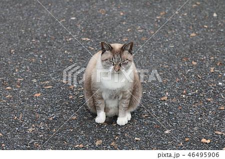 野良猫 46495906
