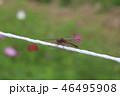 秋のトンボ 46495908