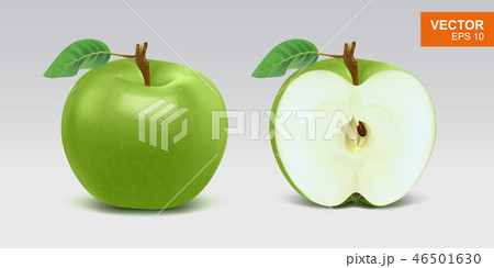 Realistic green apples vector illustration, mockup. Whole and half 46501630