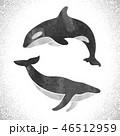 くじら クジラ 鯨のイラスト 46512959