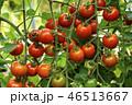 トマト プチトマト ミニトマトの写真 46513667