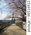 奥野エコーブリッジに咲く桜 46514912