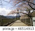 奥野エコーブリッジに咲く桜 46514913