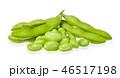 グリーン 緑 緑色の写真 46517198