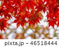 秋 紅葉 カエデの写真 46518444