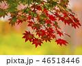 秋 紅葉 カエデの写真 46518446