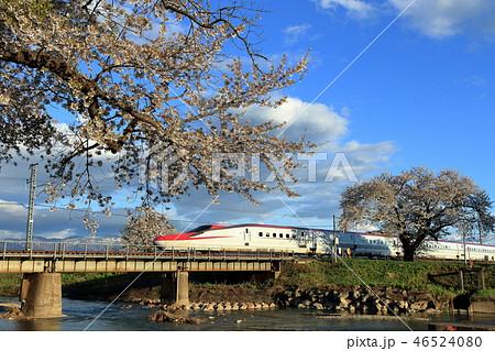 秋田新幹線・桜満開の秋田路を行く新幹線こまち 46524080