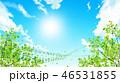 新緑(若葉) 46531855