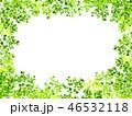 新緑(若葉) 46532118