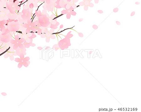 ソメイヨシノ 46532169