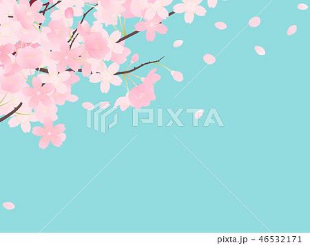 ソメイヨシノ 46532171