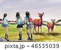 奈良公園 奈良公園の鹿 女子高生 奈良観光 修学旅行  46535039
