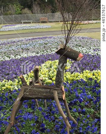 ビオラの花壇に木材のトナカイのオブジェ 46537617