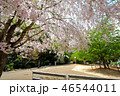 風景 散歩 花の写真 46544011