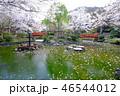 風景 植物 散歩の写真 46544012
