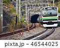 晴れ 列車 電車の写真 46544025