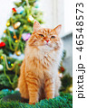 ねこ ネコ 猫の写真 46548573