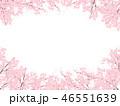 桜 花 ソメイヨシノのイラスト 46551639