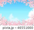 ソメイヨシノ 46551660