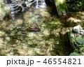 安居渓谷 仁淀川 清流の写真 46554821