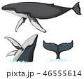 くじら クジラ 鯨のイラスト 46555614