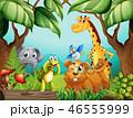 ジャングル トロピカル 熱帯のイラスト 46555999