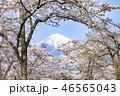 富士山 桜 花の写真 46565043