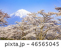 富士山 桜 花の写真 46565045