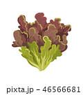 サラダ サラダ イラストのイラスト 46566681