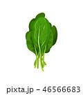 サラダ サラダ イラストレーションのイラスト 46566683