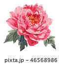 花 牡丹 ピンクのイラスト 46568986