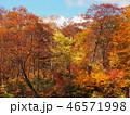 樹木 樹 ツリーの写真 46571998