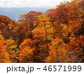 樹木 樹 ツリーの写真 46571999