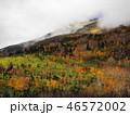 樹木 樹 ツリーの写真 46572002