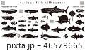 魚のシルエット素材集 46579665
