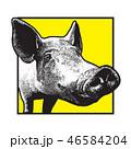 ぶた ブタ 豚のイラスト 46584204