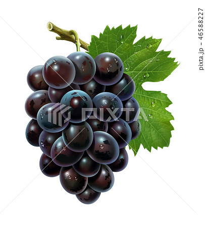 Bunch of grapes with leaf and water drops 46588227