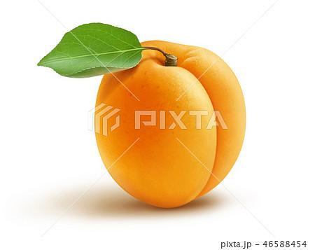 Fresh apricot with leaf illustration 46588454