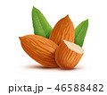 Almonds with leaves isolated on white background 46588482