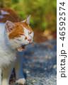 秋 猫 かわいいの写真 46592574
