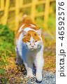 秋 猫 のんびりの写真 46592576