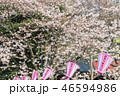 【目黒川 お花見 染井吉野】 46594986
