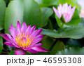 花 フラワー 花びらの写真 46595308