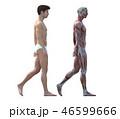 筋肉 解剖 人体のイラスト 46599666