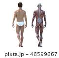 筋肉 解剖 人体のイラスト 46599667