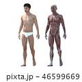 筋肉 解剖 人体のイラスト 46599669